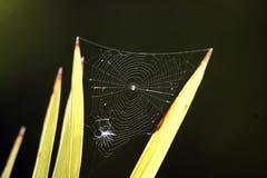 Spinnen-Netz Lizenzfreie Stockfotografie