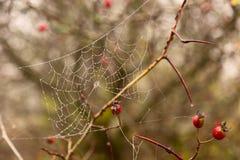 Spinnen-Netz Stockbild