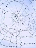 Spinnen-Netz Stockfoto