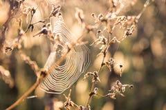 Spinnen-Netz auf der Anlage Stockfotografie