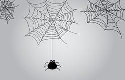 Spinnen-Netz-Hintergrund Lizenzfreie Stockfotos