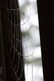 Spinnen-Netz-Perlen Lizenzfreies Stockfoto
