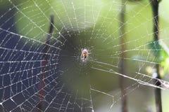 Spinnen-Netz und der grüne Hintergrund der Unschärfe stockbilder