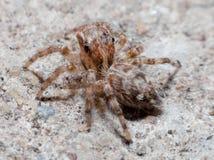 Spinnen op de weg royalty-vrije stock fotografie
