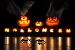 Spinnen op Halloween stock foto's