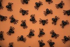 Spinnen op oranje achtergrond Royalty-vrije Stock Foto's