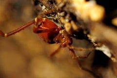 Spinnen-Papa-Fliege Lizenzfreie Stockbilder