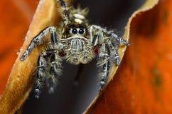 Spinnen pflanzen zwischen Blättern fort lizenzfreie stockbilder
