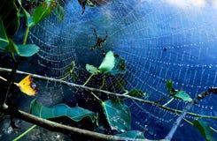 Spinnen Sie ein Netz stockbild