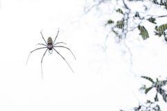 Spinnen, Spinnen im wilden, Insekten, Tiere, Natur Lizenzfreies Stockfoto
