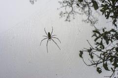 Spinnen, Spinnen im wilden, Insekten, Tiere, Natur Stockbilder