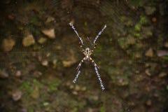 Spinnen-Spinnennetz Lizenzfreies Stockbild