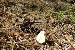 Spinnen und Schmetterling im Otternhagener Cumuje fotografia royalty free