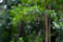 Spinnen- und Spinnennetzabschluß oben stockbilder