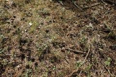 Spinnen undSchmetterling im Otternhagener hed Royaltyfri Bild
