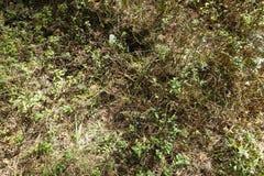 Spinnen undSchmetterling im Otternhagener hed royaltyfri foto