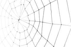 Spinnen-Web Stockfoto