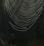 Spinnen-Web Stockbild