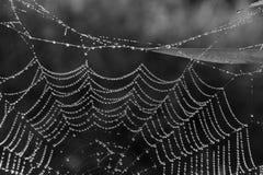 Spinnen-Web Stockbilder