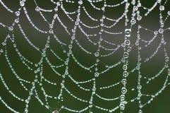 Spinnen-Web Stockfotos
