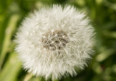 Spinnende Blume Lizenzfreie Stockfotos