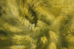Spinnende gelbe Anlage Stockfotos