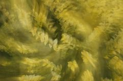Spinnende gele installatie Stock Foto's