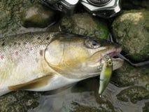 Spinnendes Fischen für Forelle Lizenzfreies Stockfoto