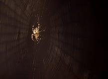 Spinnendes Web der Spinne Lizenzfreie Stockfotos
