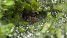 Spinnenen-Gesicht lizenzfreie stockfotografie