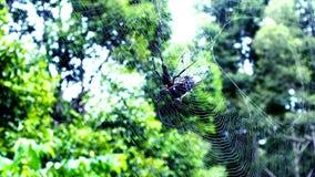 Spinnenfalle lizenzfreies stockbild