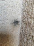 Spinnenfell lizenzfreie stockfotografie