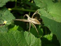 Spinnengehen stockfotografie