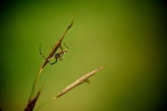 Spinnenhintergrund stockfotografie