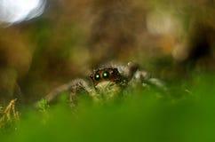 spinneninsecten op de oppervlakte van groen gras royalty-vrije stock fotografie