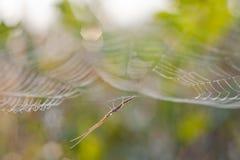 Spinnenkran. Stockbild