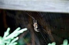 Spinnenleben Lizenzfreies Stockbild