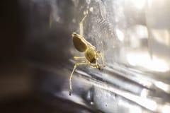 Spinnenmakro Lizenzfreies Stockfoto