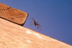 Spinnenmitten in der luft Lizenzfreies Stockfoto