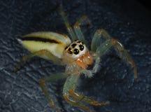 Spinnennahaufnahme Stockfotografie