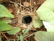 Spinnennest met nakomelingen en moeder in Swasiland Stock Foto