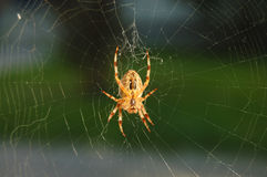 Spinnennettoweb Lizenzfreie Stockbilder