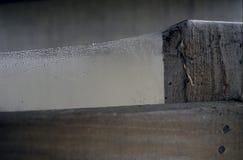 Spinnennetz Stockbild