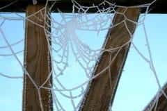 Spinnennetz 2 Lizenzfreie Stockfotografie