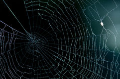Spinnennetz Stockfotos