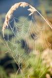 Spinnennetz Stockfoto