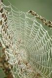 Spinnennetz Lizenzfreie Stockbilder