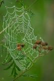 Spinnennetz Lizenzfreie Stockfotografie