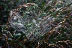 Spinnennetz. Stockbild