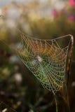 Spinnennetz. Lizenzfreies Stockbild